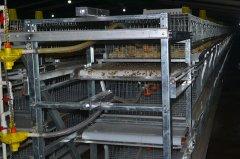客户新上养鸡设备